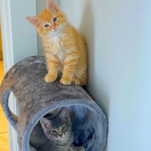 Pet Sitter Needed Fot Two 3 Months Old Kitten Pet Sitter Job In Atlanta Ga Petsitter Com