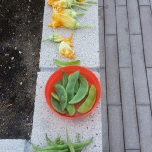 Gardener Provider Tonya B Gallery Image 2