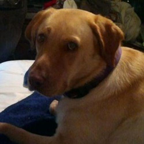 Pet Care Provider Shelia A's Profile Picture
