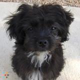 Dog Walker, Pet Sitter in Oro Valley