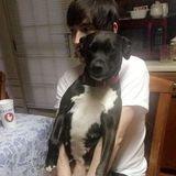 Ludowici/Hinesville Pet Sitting