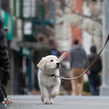 Dog Walker, Pet Sitter in New York City