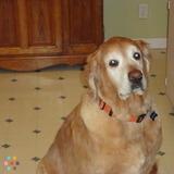 Dog Walker, Pet Sitter in Muskegon