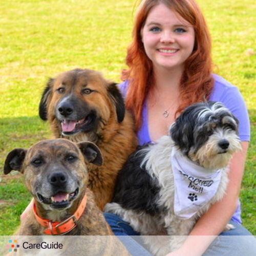 Pet Care Provider Abbie Hughes's Profile Picture