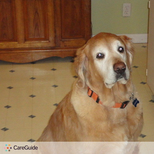 Pet Care Provider Teresa Mogdics's Profile Picture
