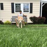 Bridgeport Pet Supervisor Looking For Job Opportunities