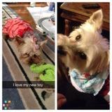 Dog Walker, Pet Sitter in Fort Collins