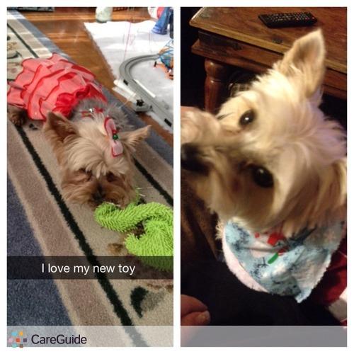 Pet Care Provider Stephanie Carpino's Profile Picture