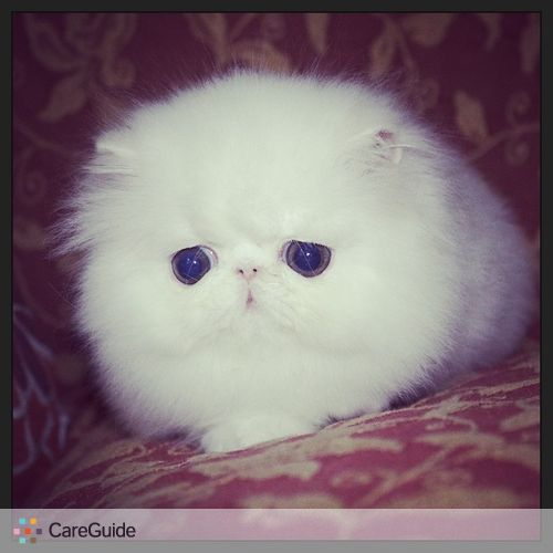 Pet Care Job Kirstin Parro's Profile Picture