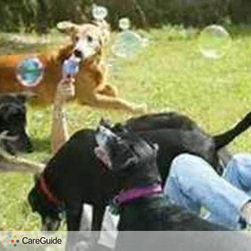 Pet Care Provider Kim H's Profile Picture