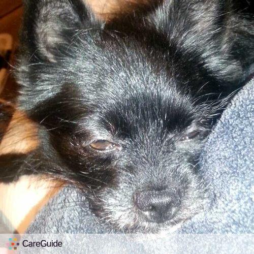 Pet Care Provider Ashli Scott's Profile Picture