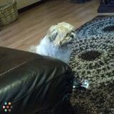 Dog Walker, Pet Sitter in Willowbrook