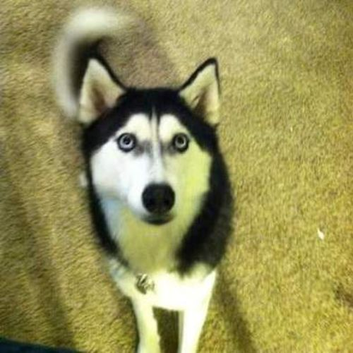 Pet Care Provider Shadow S Gallery Image 1