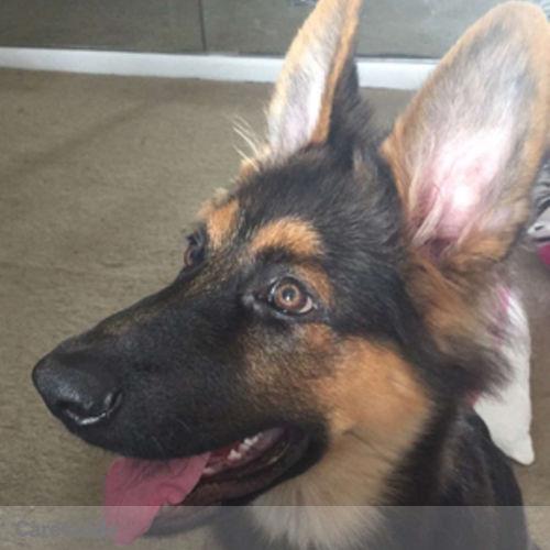 Pet Care Provider Melanie Schoenberg's Profile Picture