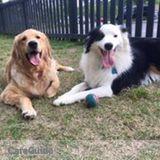 Dog Walker, Pet Sitter in North Charleston
