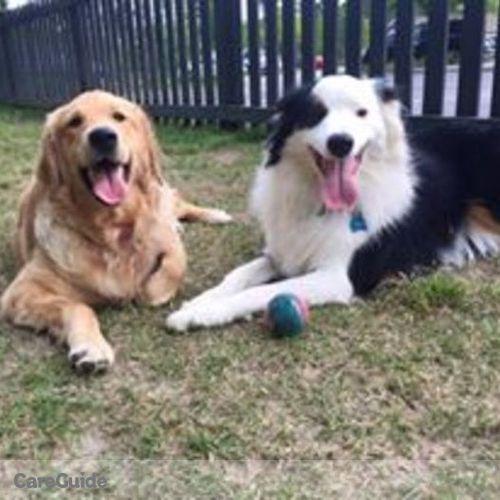 Pet Care Provider Meagan Semren's Profile Picture