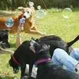 Dog Walker, Pet Sitter in Gray
