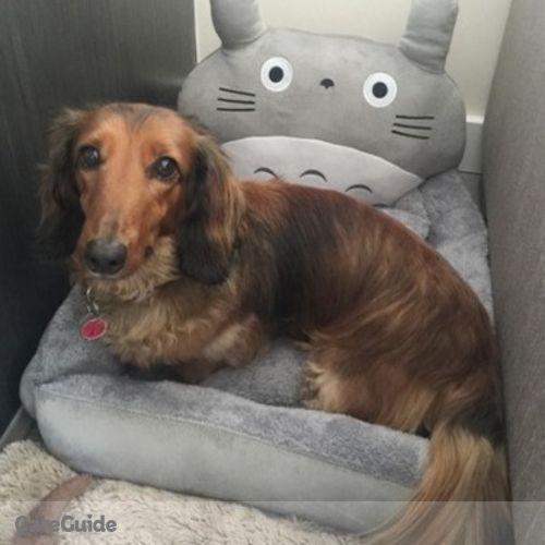 Pet Care Provider Jenny Wan's Profile Picture