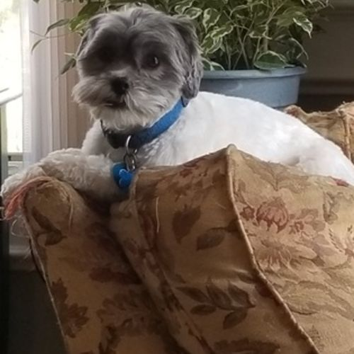 Pet Care Provider April G's Profile Picture