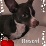 Just care for my 2 yr old ESA companion pup, Rascal, for at