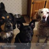 Dog Walker, Pet Sitter in Pt Pleasant