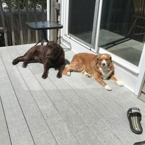 Pet Care Provider Diane Russo's Profile Picture