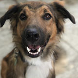 Job Posting: Dog Sitter/Dog Walker