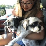 Searching to care for your little fur babies