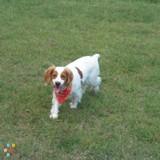 Dog Walker, Pet Sitter in Kissimmee