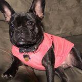 Available: Professional Pet Sitter in Bridgeport, Connecticut
