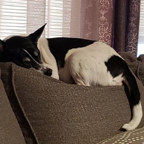 Pet Care Job Lori P's Profile Picture