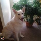 Dog Walker, Pet Sitter in Belen