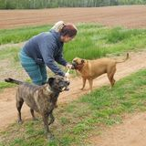 For Hire: Professional Pet Walker/In-Home Sitter in and around Charlottetown, PEI