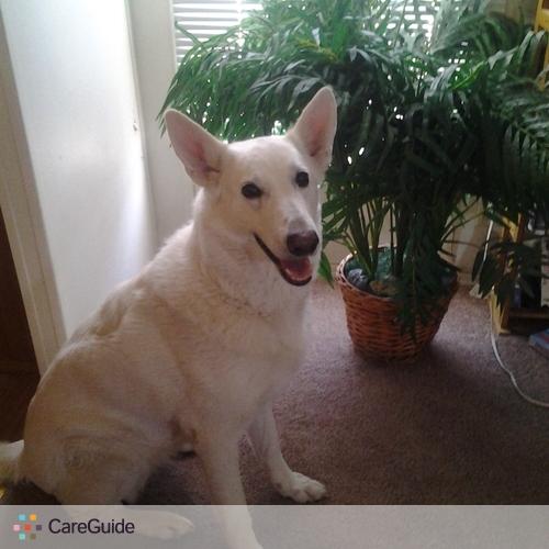Pet Care Provider Corina Bustamante's Profile Picture
