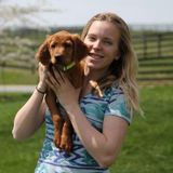 Experienced pet sitter, dog walker and overnight care. I am also doing online school to become a certified dog trainer.