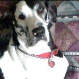Dog Walker, Pet Sitter in Holiday