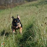 Dog Walker, Pet Sitter in Boynton Beach