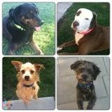 Dog Walker, Pet Sitter, Kennel in Burbank