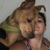 For Hire: Reliable Cat&Dog Sitting Professional in Crestview, Florida