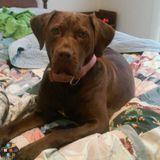 Dog Walker Job, Pet Sitter Job in Brunswick