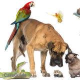 Dog Walker, Pet Sitter in Downey