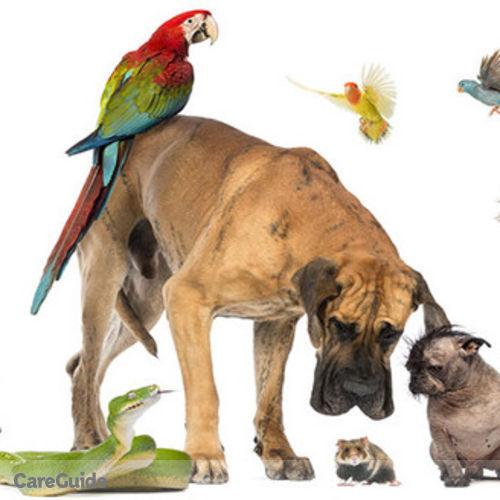 Pet Care Provider Ashanti Alexander's Profile Picture