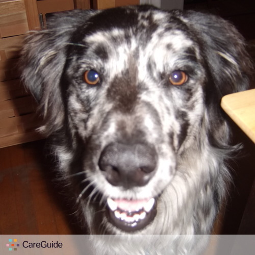 Pet Care Provider Brenda Matthews's Profile Picture