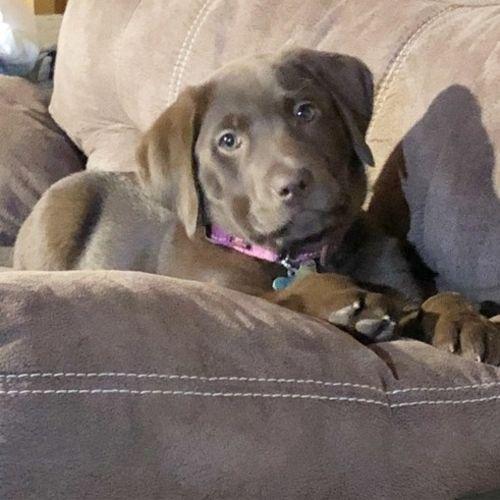 Pet Care Provider Abby Rhodes's Profile Picture