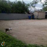 Dog Walker, Pet Sitter in Tucson