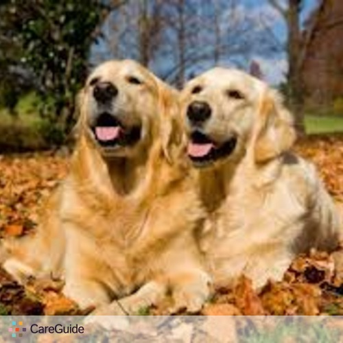 Pet Care Provider Fun For Dogs Walking Service's Profile Picture