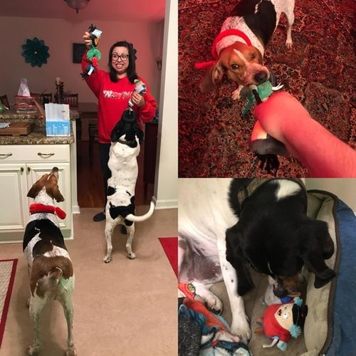 Pet Care Provider Amanda Ortiz Gallery Image 2