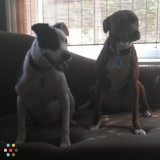 Dog Walker, Pet Sitter in Douglasville