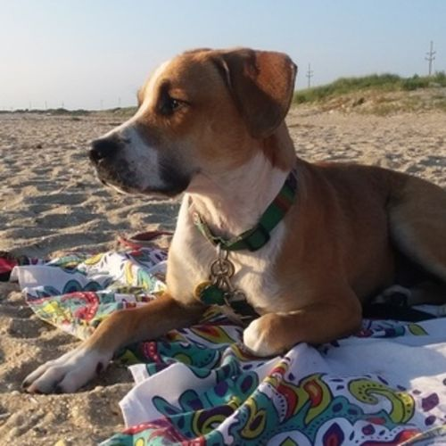 Pet Care Provider MaryCarmen Carrion's Profile Picture