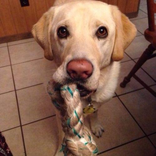 Pet Care Provider Mariel Rascon Gallery Image 2